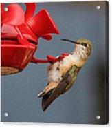 Hummingbird On Feeder Acrylic Print