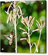 Hummingbird Pink Green - Floating Hummingbird Flashes Red Acrylic Print