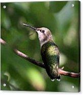 Hummingbird - Ruby-throated Hummingbird - Detail Acrylic Print