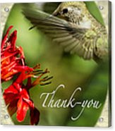 Hummingbird Thanks Acrylic Print