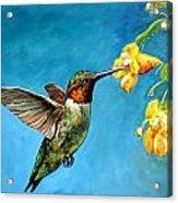 Hummingbird With Yellow Flowers Acrylic Print