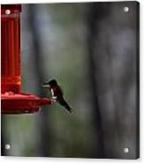 Hummingbirds 332 Acrylic Print