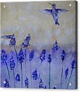 Hummingbirds Among Larkspur Acrylic Print