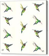 Hummingbirds Number 2 Acrylic Print