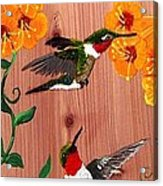 Hummingbirds On Cedar Acrylic Print