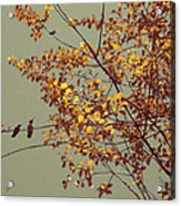Hummingbirds On Yellow Tree Acrylic Print