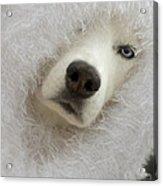 Humorous Pets Acrylic Print by Cindy Rubin