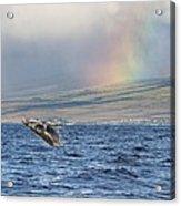 Humpback Whale And Rainbow Acrylic Print