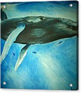 Humpback Whale Acrylic Print by Lucy D