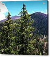 Humphreys Behind The Spruces  Acrylic Print