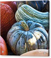 Humungous Edible Gourds Acrylic Print