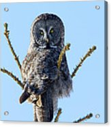 Hundred Mile Stare Acrylic Print