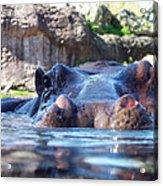 Hungry Hungry Hippo Acrylic Print