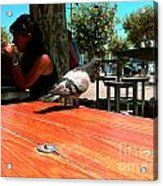 Hungry Pigeon At Mcdonalds Acrylic Print