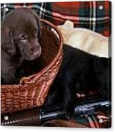 Hunters Puppy Dreams Acrylic Print by Skip Willits