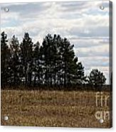 Hunter's Raised Blind In A Spring Field Acrylic Print