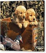 Hunting Buddies - Fs000130 Acrylic Print