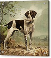 Hunting Dog Circa 1879 Acrylic Print by Aged Pixel
