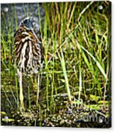 Hunting Heron Acrylic Print