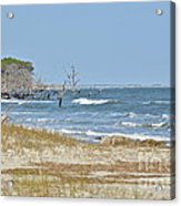 Hunting Island State Park Acrylic Print