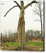 Hurricane Katrina Resurrection Tree Acrylic Print