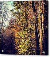 Hurst Woods Acrylic Print