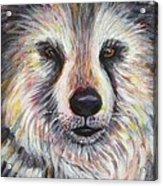 Husky Wolf Acrylic Print