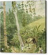 Hut In The Jungle Circa 1816 Acrylic Print by Aged Pixel