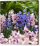 Hyacinth Garden Acrylic Print