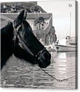 Hydra Horse Acrylic Print