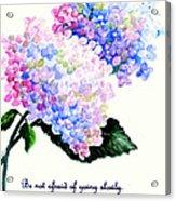 Hydranga Poem Acrylic Print