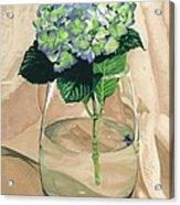 Hydrangea Blossom Acrylic Print
