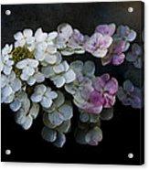 Hydrangea Dreams Acrylic Print