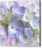 Hydrangea Floral Macro Acrylic Print