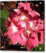 Hydrangea Flower Acrylic Print
