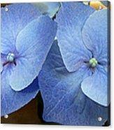 Hydrangea Flower Set Acrylic Print