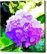Hydrangea In Watercolor Acrylic Print