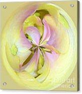 Hydrangea Kaleidoscope Acrylic Print