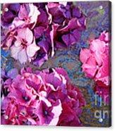 Hydrangea Mix Acrylic Print