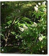 Hydrangea Path Acrylic Print