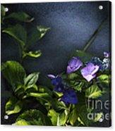 Hydrangea Violet-blue Acrylic Print