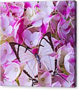 Hydrangea With Bright White Butterfly Acrylic Print