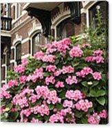 Hydrangeas In Holland Acrylic Print