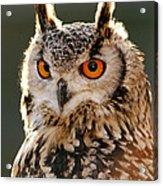 Hypnoteyes  Eurasian Eagle Owl Acrylic Print