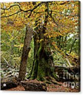 I Am Here Since Almost 1000 Years Acrylic Print