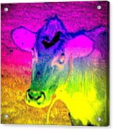I Think I Am The Most Colorful Cow You Know  Acrylic Print