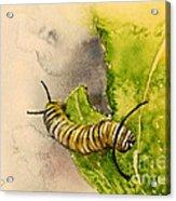 I Am Very Hungry - Monarch Caterpillar Acrylic Print