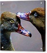 I Crown You Ducklet Acrylic Print by DerekTXFactor Creative