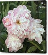 I Cry For You My Peonies Acrylic Print