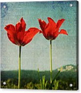 I Go To The Hills When My Heart Is Lonely Acrylic Print